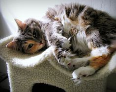 mágico-miau: Happy Caturday & # 160 ;!  (Por Trish Hamme)
