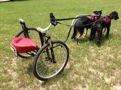 Custom dog carts