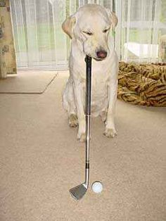 Just A Doggy Working On His Golf Game..