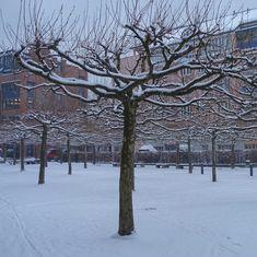munich | germany | münchen | deutschland | winter im hinterhof der gema