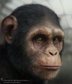 chimp: