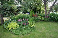 plantes-ombre-varéités-fleurs-multicolore-composition