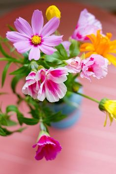Blue container with spring colors of pinks yellow flowers. Even thegreen is vibrant. My Flower, Yellow Flowers, Beautiful Flowers, Wild Flowers, Cosmos Flowers, Happy Flowers, Summer Flowers, Fresh Flowers, Fleur Orange