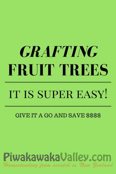 how to: grafting fruit trees. An easy guide to grafting your own fruit tree