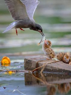 The way cats and dogs eat is related to their animal behavior and their different domestication process. Pretty Birds, Love Birds, Beautiful Birds, Animals Beautiful, Nature Animals, Animals And Pets, Cute Baby Animals, Funny Animals, Animal Photography