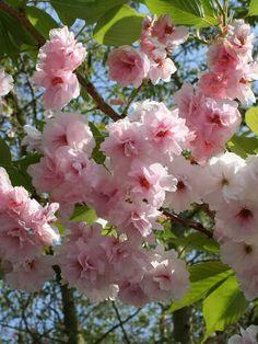 66c5f9c2e1a1 10 Best Cherry Blossom images