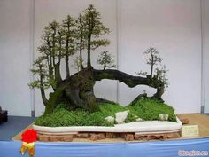 Bonsai TreesMore Pins Like This At FOSTERGINGER @ Pinterest ㊙️㊗️