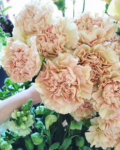 They get a bad rap but they're making a come back. E Flowers, Blush Flowers, Types Of Flowers, Bridal Flowers, Dried Flowers, Beautiful Flowers, Flowers Garden, White Wedding Bouquets, Floral Wedding