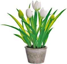 White Tulips in Pot, Artificial Floral, 13 Inches High, Spring and Sum - Richards Expo Artificial Boxwood Wreath, Artificial Flowers, Pots, Forever Flowers, White Tulips, White Home Decor, Delphinium, Calla Lily, Outdoor Life
