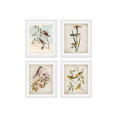 Birds Original Vintage Prints (525 AUD) ❤ liked on Polyvore featuring home, home decor, wall art, glass wall art, framed wall art, bird wall art, bird home decor and glass home decor