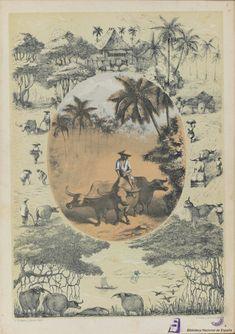[El carabao]. Giraudier, Baltasar — Libro — 1859