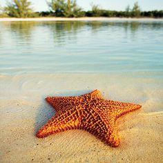 Star fish - @Elena Kalis- #webstagram