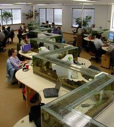 Epic Office Tank