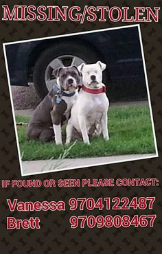 Their names are snow and debo snow is female and wearing a red collar and is all white with little black dots on her belly and debo is male wearing a blue and is gray with white neck and chest please please help us get them home to us we terribly miss them and they would like to be here with us we think they may have been picked up and either mixed up with flood animals or are stolen by some one so please help