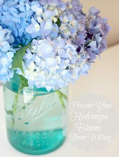 Prevent hydrangeas from wilting: Tip to Keeping Cut Hydrangeas Looking Fresh.... I am so glad to know this! I love hydrangeas but they always wilt on me too soon. This tip should help stop this!