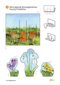 3-Titel-Schneegloeckchen-KiGaPortal-Kindergarten-Vorschule-Grundschule-Fruehblueher-Schneegloeckchen-Lapbook-Blumen-Projektarbeit-Sachunterricht-Natur-Freiarbeit