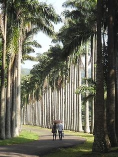 Palm Ave. Royal Botanical Garden, Peradeniya, Sri Lanka. Pic: bonthego