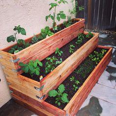 DIY Veggie Garden!