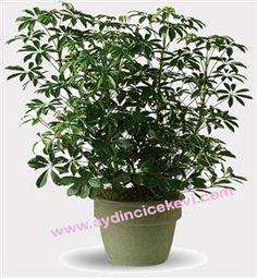 http://aydincicekevi.com/nazilli_cicekci.aspx Nazilliye çiçek siparişi kredi kartı veya havale ile verebilirsiniz.
