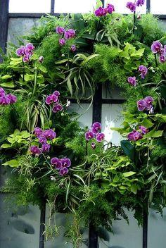 Vert & Violet