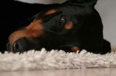 Sandra Nusser My sunshine doesn't come from the skies, it comes from the love in my dog's eyes. #Doberman