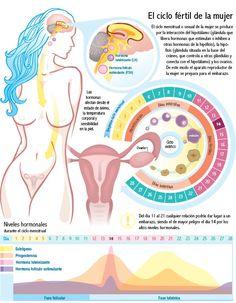 infografias ginecologia - Buscar con Google