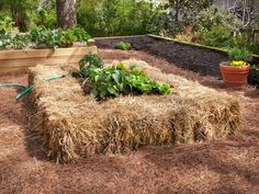 Kelly shares a new twist on the raised bed: Growing edibles in straw bales --> http://hg.tv/pz3o raised gardens, raised bed gardens, straw bale, straw gardening, rais bed, strawbal garden, bale garden