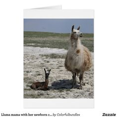 Llama mama with her newborn cria card