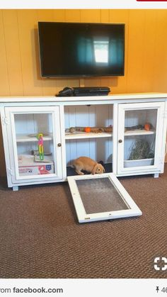 Never locked up of course Guinea Pig Hutch, Guinea Pigs, Parakeet Cage, Cages For Sale, Lock Up, Rabbit Hutches, Pet Rabbit, Pet Shop, Animals