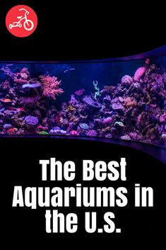 The Best Aquariums in the U. Great places to visit when you're traveling or need something fun during the summer! Kids Travel Activities, Educational Activities For Kids, Summer Activities For Kids, Summer Kids, Fun Learning, Outdoor Activities, California With Kids, Southern California, Fun Places For Kids
