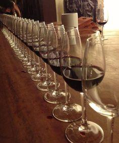 amo vinhos