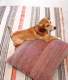 Floor Cushions And Rugs Puppies Oh My Cambie Design