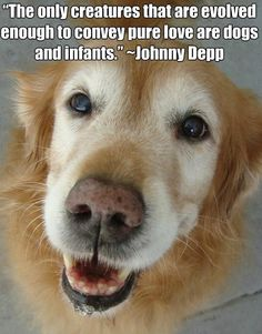 The only creatures that are evolved enough to convey pure love are dogs and infants. ~ Johnny Depp  #dog #quotes