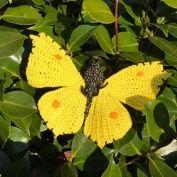 Orange Tip Butterfly amigurumi pattern - Amigurumipatterns.net