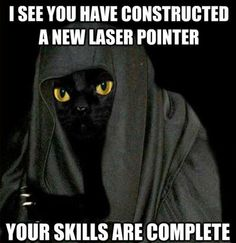 Star Wars Cats - I've got a bad feline about this. Funny Cats, Funny Animals, Cute Animals, Animal Memes, Crazy Cat Lady, Crazy Cats, Dc Movies, Cat Boarding, Star Wars Humor