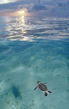 Oceaan met drijvende schildpad