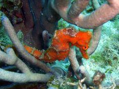 Seahorse Diving, Fish, Pets, Animals, Animales, Scuba Diving, Animaux, Animal, Animais