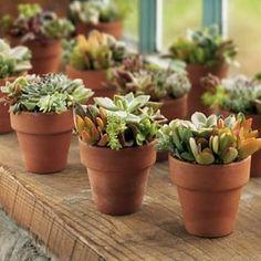 Miniature Succulent Gardens in Terra Cotta Pots: Buy 2, Get 1 Free! - Smith & Hawken