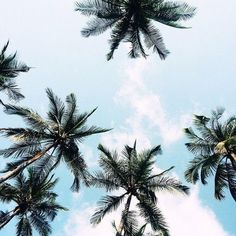 Afbeelding via We Heart It #hawaii #inspo #palmtrees #palms #summer #tropical #tumblr #goodvibes