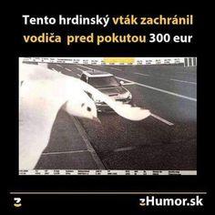 Funny Memes, Jokes, Haha, Humor, Nerf, Pictures, Quote, Photos, Husky Jokes