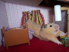 How to Make a Doll House Into a Hamster Cage in 12 Steps. I doubt I'll ever do this, but I think it's hilarious and the picture is really cute!