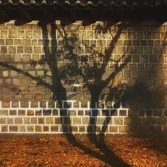 Instagram【airiris0505】さんの写真をピンしています。 《. 降り積もった落ち葉の量の多さに 日本よりも深い秋を感じました。 . . 많은 낙엽의 양을 보며  일본보다 더 깊은 가을을 느꼈습니다. . . #旅#一人旅#韓国#ソウル#徳寿宮#夜景#夜景ら部 #風景#秋#紅葉#写真好きな人と繋がりたい #ファイ#旅#一人旅#韓国#ソウル#徳寿宮#夜景#夜景ら部 #風景#秋#紅葉#写真好きな人と繋がりたい #ファインダー越しの私の世界 #여행#서울#덕수궁 #야경#풍스타그램 #풍경#가을#단풍#trip#korea#nightview #onlyinkorea #ig_korea#photooftheday #landscapephotography #autumn#fall🍁》