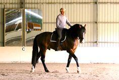 Manolo Mendez on Pirouette (Part I of III): Principles of Training the Walk Pirouette Horse Magazine, Horse Training, Horseback Riding, Dressage, Walking, Horses, French School, Animals, Simple