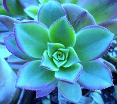 lovely succulent