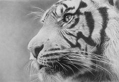 Tiger by CubistPanther.deviantart.com on @deviantART