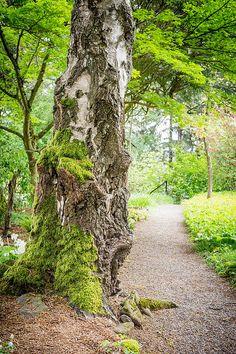 Mossy Tree Along A Path photograph by Priya Ghose