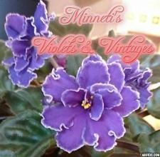 NOID Vintage circa 1990 African Violet baby plant