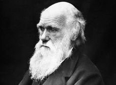 Charles Darwin confessed his atheism in a private letter which has gone up for auction - The celebrated naturalist, famed for his research on evolution, said he did not believe Jesus was the son of God or that the Bible was divine revelation Charles Darwin Biography, Einstein, Jose Marti, Divine Revelation, Origin Of Species, Theory Of Evolution, Darwin Evolution, Natural Selection, Atheism