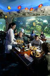 Dining at the Downtown Aquarium - Denver, Colorado