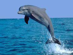 Дельфины. Фото